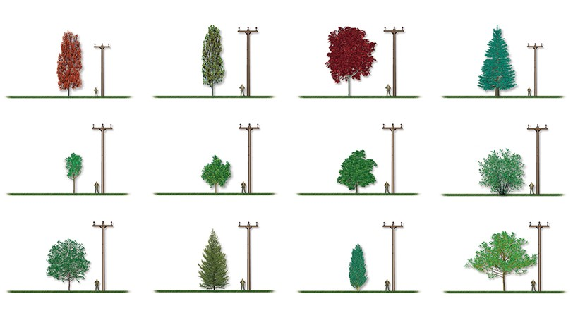 Electrical safety | What to do BEFORE planting a tree